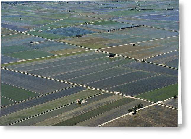 Agronomy Greeting Cards - Rice Fields, Ebro Delta Greeting Card by Jordi Todó Vila