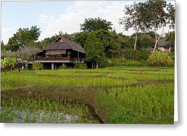 Rice Paddy Greeting Cards - Rice Fields In Front Of Villas, Four Greeting Card by Panoramic Images