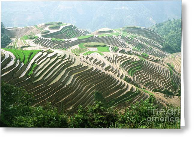 Rice Paddy Greeting Cards - Rice Terraces Greeting Card by King Wu