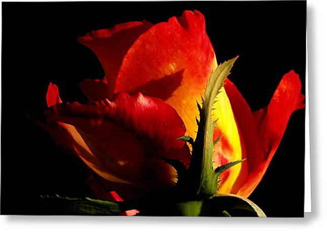 Green And Yellow Digital Greeting Cards - Rising Rose Greeting Card by Camille Lopez
