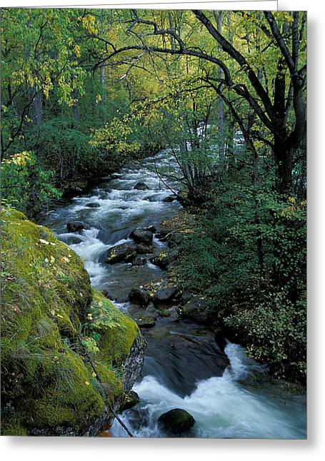 Landscape Photos Greeting Cards - River Greeting Card by Anonymous