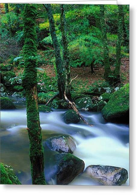 Autumn Colors Greeting Cards - River Flowing Through A Forest, River Greeting Card by Panoramic Images