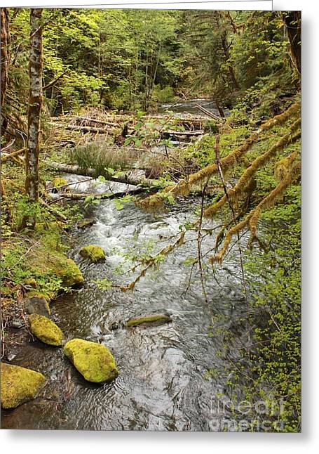 Moss Green Greeting Cards - River through the Rainforest Greeting Card by Carol Groenen