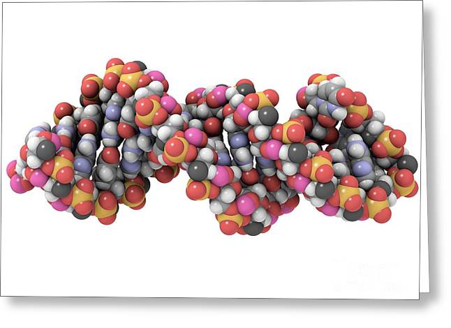 Polypeptide Greeting Cards - Rna-editing Enzyme Combined With Rna Greeting Card by Laguna Design
