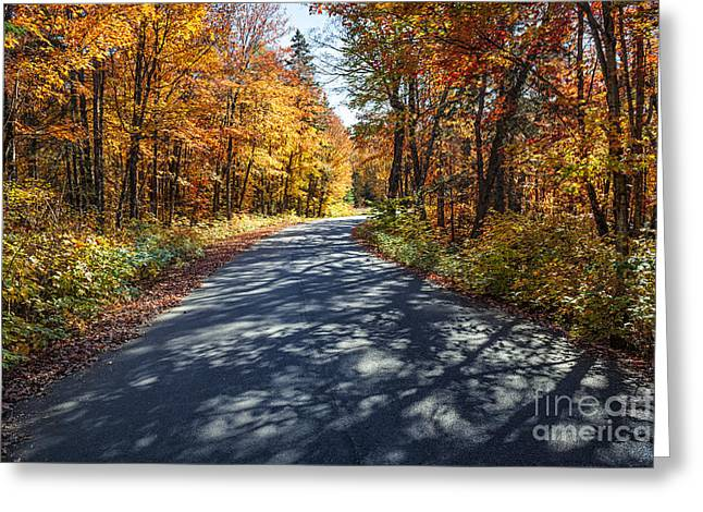 Bending Light Greeting Cards - Road in fall forest Greeting Card by Elena Elisseeva
