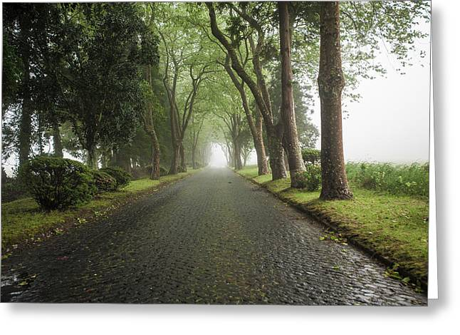 China Beach Greeting Cards - Road of Trees Greeting Card by Joseph Amaral