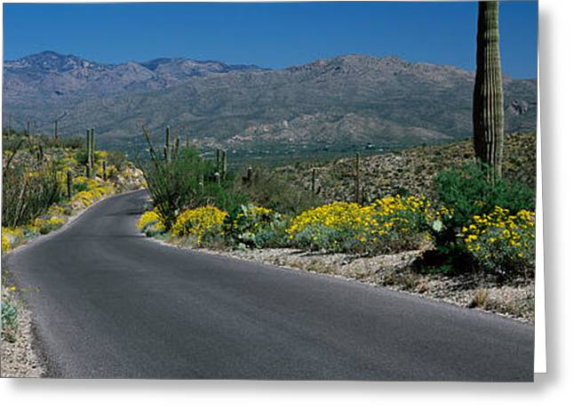 Saguaro Cactus Greeting Cards - Road Passing Through A Landscape Greeting Card by Panoramic Images