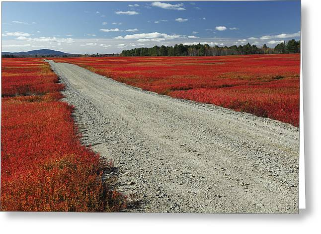 Photos Of Autumn Greeting Cards - Road Through Autumn Blueberry Maine Greeting Card by Scott Leslie