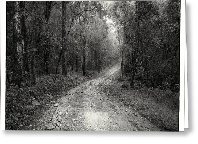 Peaceful Greeting Cards - Road Way In Deep Forest Greeting Card by Setsiri Silapasuwanchai