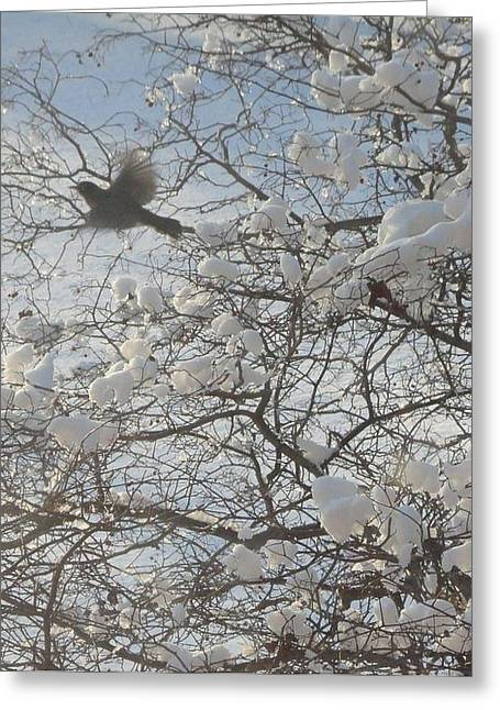 Guy Ricketts Photography Greeting Cards - Robin In Flight Greeting Card by Guy Ricketts