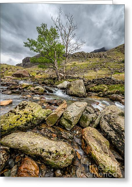 Fall Grass Greeting Cards - Rocky Stream Greeting Card by Adrian Evans