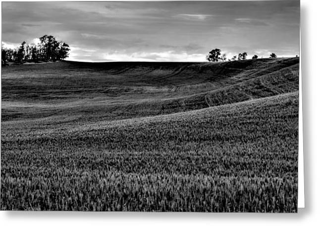 Lanscape Greeting Cards - Rolling Hills of the Palouse Greeting Card by David Patterson