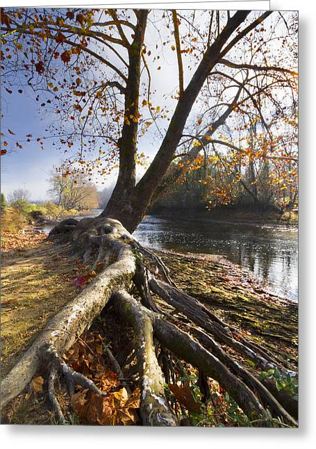 Tree Reflection At Sunset Greeting Cards - Roots Greeting Card by Debra and Dave Vanderlaan