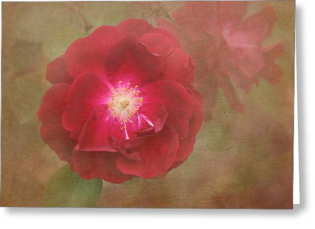 Enhanced Greeting Cards - Rose Greeting Card by Angie Vogel