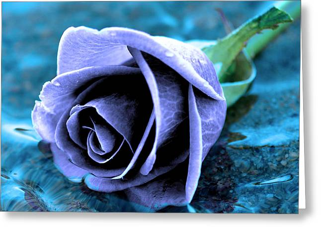 Nature Center Greeting Cards - Rose in water  Greeting Card by Toppart Sweden