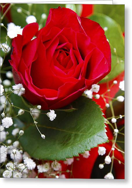 Beauty Greeting Cards - Rose Greeting Card by Les Cunliffe