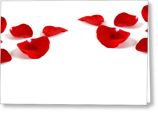 Light Magnifications Greeting Cards - Rose Petals Greeting Card by Lane Erickson
