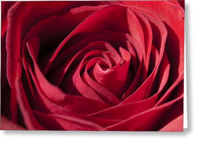 Tara Lynn Greeting Cards - Rose Red Greeting Card by Tara Lynn