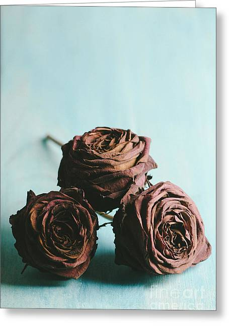 Purple Pyrography Greeting Cards - Roses Greeting Card by Jelena Jovanovic