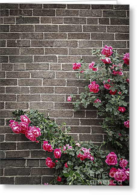 Roses Greeting Cards - Roses on brick wall Greeting Card by Elena Elisseeva