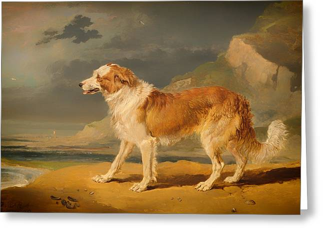 Collie Greeting Cards - Rough-Coated Collie Greeting Card by James Ward