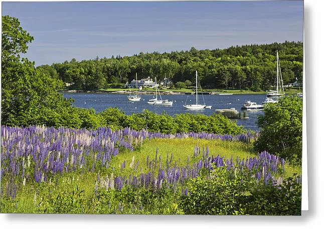 Down East Greeting Cards - Round Pond Lupine Flowers on The Coast Of Maine Greeting Card by Keith Webber Jr