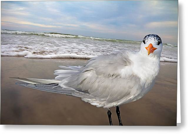 Tern Digital Art Greeting Cards - Royal Tern Greeting Card by Betsy A  Cutler