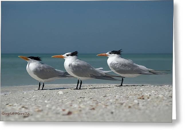 Sea Birds Greeting Cards - Royal Terns Greeting Card by Gerald Marella