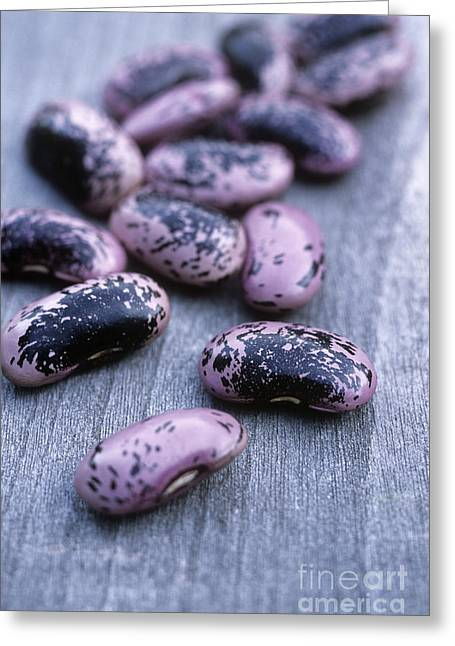 Gi Greeting Cards - Runner Beans Phaseolus Scarlet Runner Greeting Card by Maxine Adcock