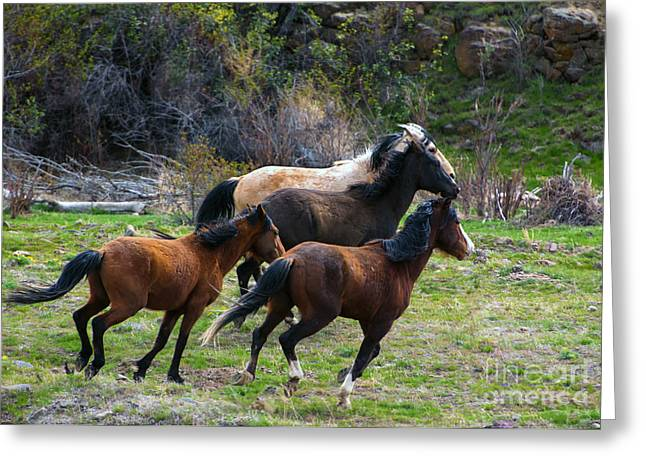 Wild Horses Photographs Greeting Cards - Running Free Greeting Card by Mike  Dawson