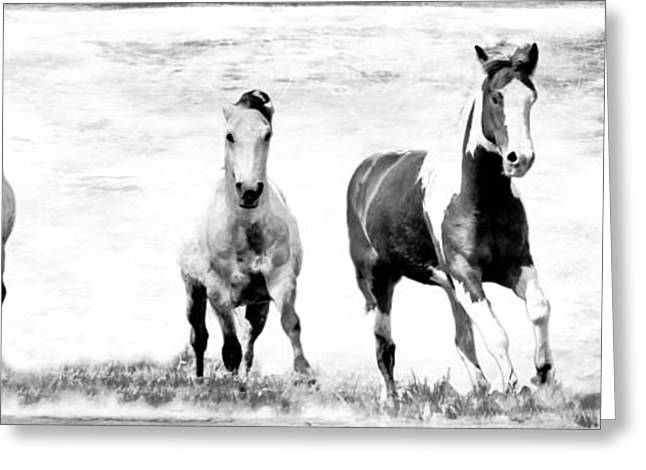 Breeds Greeting Cards - Running Wild Black and White Greeting Card by Athena Mckinzie