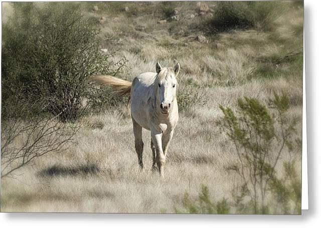 White Stallion Greeting Cards - Running Wild  Greeting Card by Saija  Lehtonen