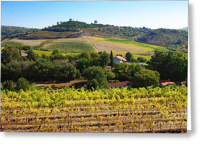 Vineyard Landscape Greeting Cards - Rural Landscape Greeting Card by Carlos Caetano