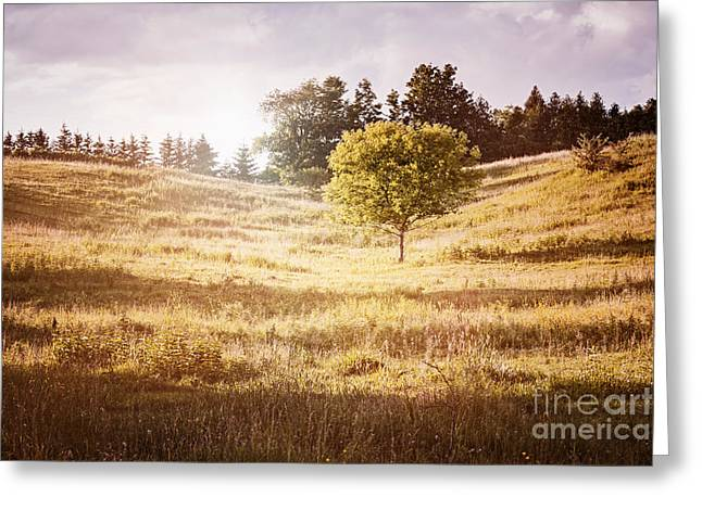Warm Landscape Greeting Cards - Rural landscape with single tree Greeting Card by Elena Elisseeva