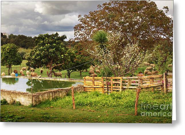 Ranch Home Greeting Cards - Rural Scene Greeting Card by Carlos Caetano