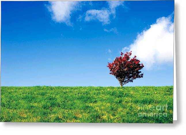 Field. Cloud Greeting Cards - Rural Scene Greeting Card by Victor Habbick Visions