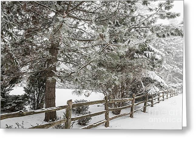 Snow Covered Field Greeting Cards - Rural winter scene with fence Greeting Card by Elena Elisseeva
