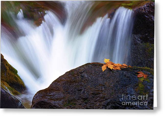 Autumn Leaf Photographs Greeting Cards - Rush Greeting Card by Mike Dawson