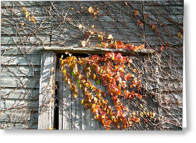 Grape Vines Greeting Cards - Rustic Door 2 Greeting Card by The Art of Marsha Charlebois