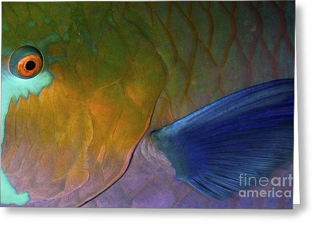 Brightly Colored Fish Greeting Cards - Rusty Parrotfish Greeting Card by PhotoStock-Israel