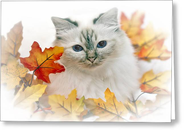 Familiar Greeting Cards - Sacred Cat of Burma Greeting Card by Melanie Viola