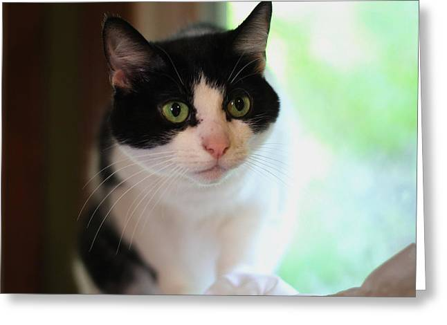 Photographers Conyers Greeting Cards - Sadie 4 Greeting Card by Cathy Lindsey