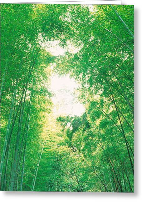 Recently Sold -  - Bamboo Fence Greeting Cards - Sagano Kyoto Japan Greeting Card by Panoramic Images