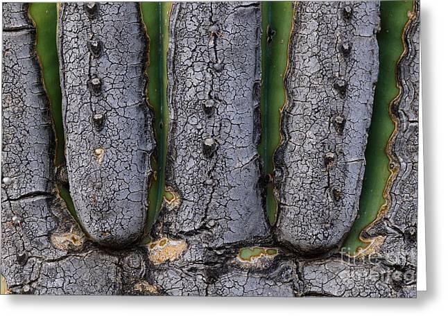 Saguaro Cactus Close-up Greeting Card by John Shaw