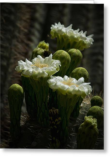 White Cactus Flower Greeting Cards - Saguaro Cactus Greeting Card by Saija  Lehtonen