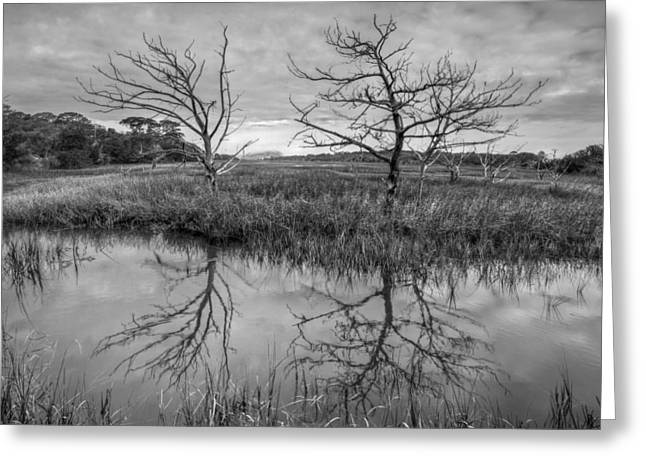 Surf Silhouette Greeting Cards - Salty Marsh at Jekyll Island in Black and White Greeting Card by Debra and Dave Vanderlaan