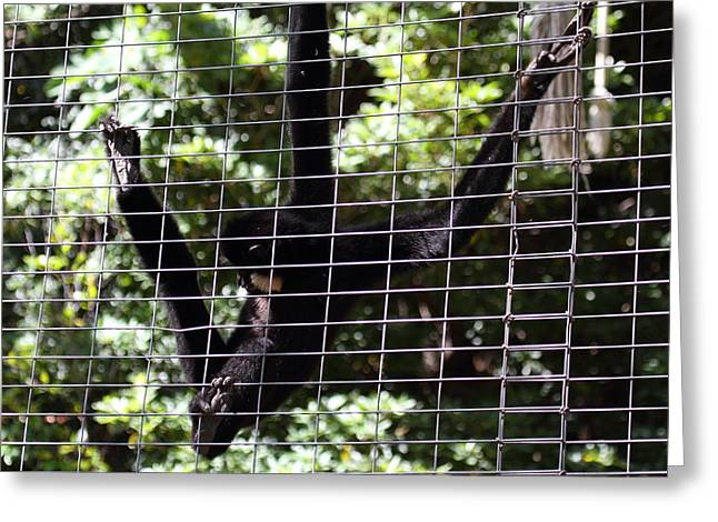 California Photographs Greeting Cards - San Diego Zoo - 12127 Greeting Card by DC Photographer