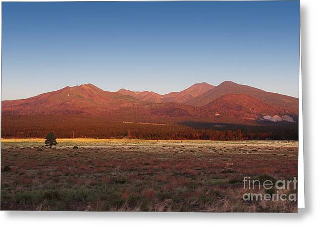 Rugged Mountains Greeting Cards - San Francisco Peaks Sunrise Greeting Card by Jemmy Archer