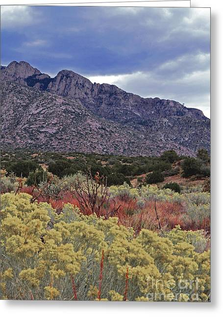 Sandias Greeting Cards - Sandia Mountain Wildflowers Greeting Card by Andrea Hazel Ihlefeld