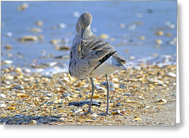 Seabirds Greeting Cards - Sandpiper Greeting Card by Betsy C  Knapp